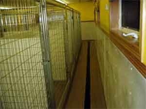 A view of the clean and modern indoor kennels at Autumn Breeze Kennel