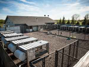 A view of the clean and modern outdoor kennels at Autumn Breeze Kennel