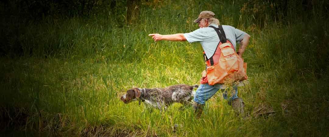 Dog Training In Isle Mn