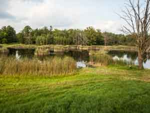 One of the many ponds used for hunting dog training at Autumn Breeze Kennel